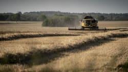 Ny rapport viser, hvor skidt naturen har det i Europa: I Danmark er det særligt slemt