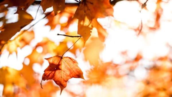Træernes smarte taktik: Sådan ved de, at de skal smide bladene i efteråret
