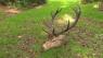 Krybskytter skar hovedet af sjældent set krondyr og lod kroppen ligge