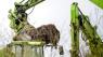 Nye oplysninger om mink-nedgravning ryster politikere: 'En ekstrem grad af kynisme'